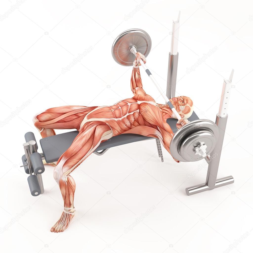Ejercicio de gimnasio de musculaci n press de banca con for Gimnasio musculacion