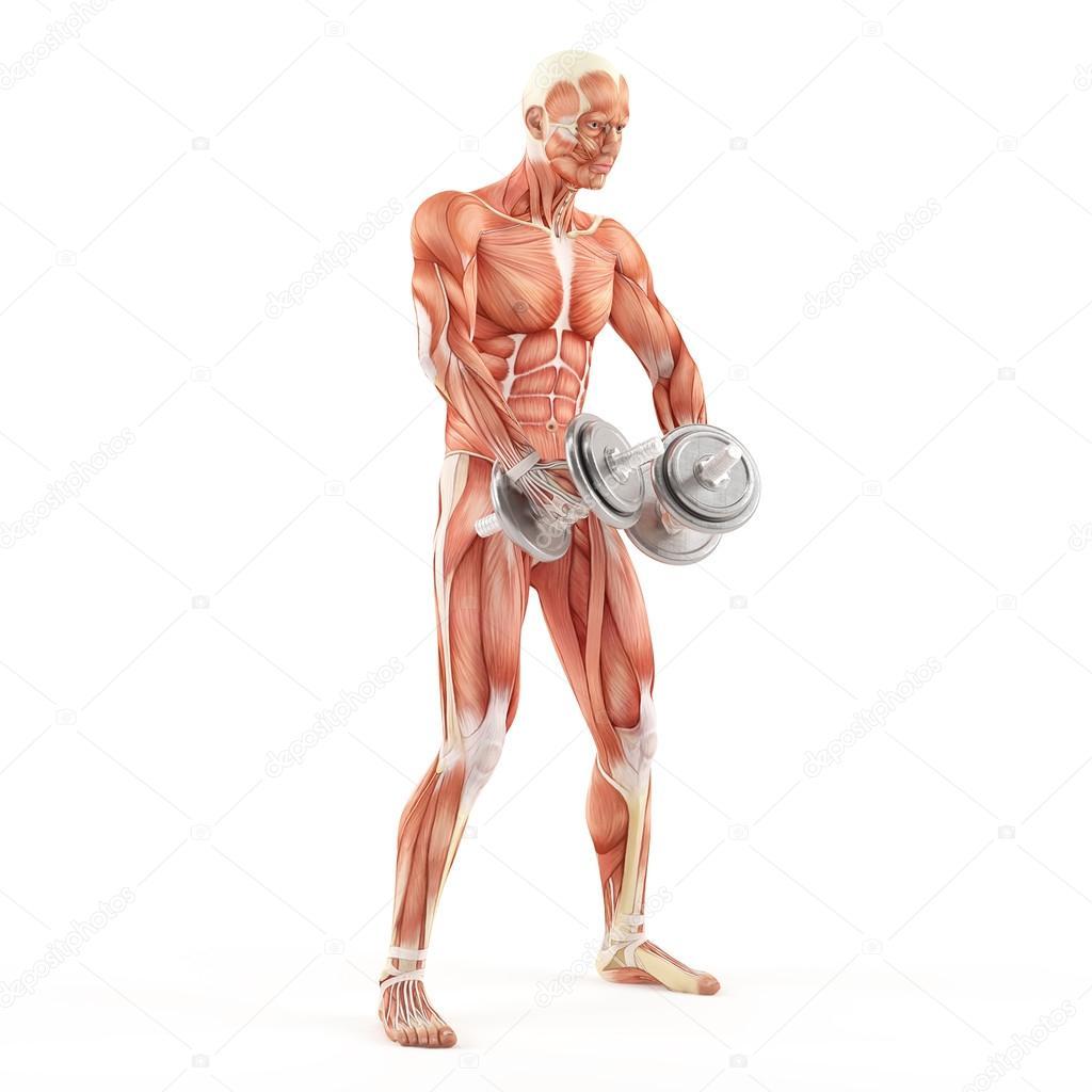 Bodybuilding Gym Exercising Breeding Dumbbells While Standing