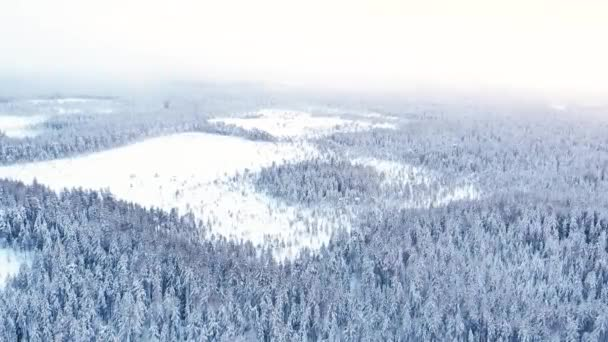 Letecké záběry zamrzlé lesy, bílé zamrzlé stromy, úžasná zimní krajina.