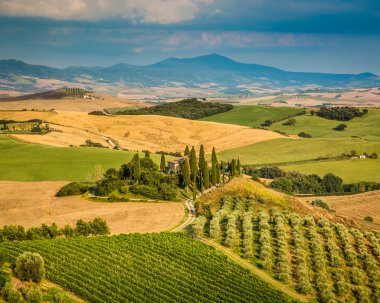 Scenic Tuscany landscape with rolling hills and valleys in golden evening light, Val d'Orcia, Italy. stock vector