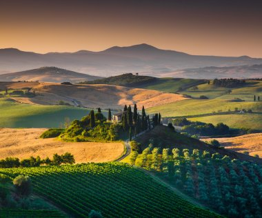 Scenic Tuscany landscape with rolling hills and valleys in golden morning light, Val d'Orcia, Italy. stock vector