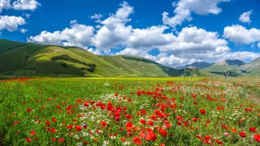 Piano Grande summer landscape, Umbria, Italy