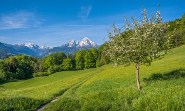 Springlike alpine mountain landscape with flowers and blooming fruit trees