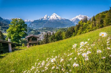 Bavarian Alps with beautiful flowers and Watzmann in springtime, Bavaria, Germany