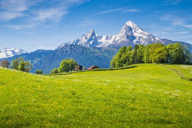 Idyllic landscape in the Alps with fresh green meadows and bloom
