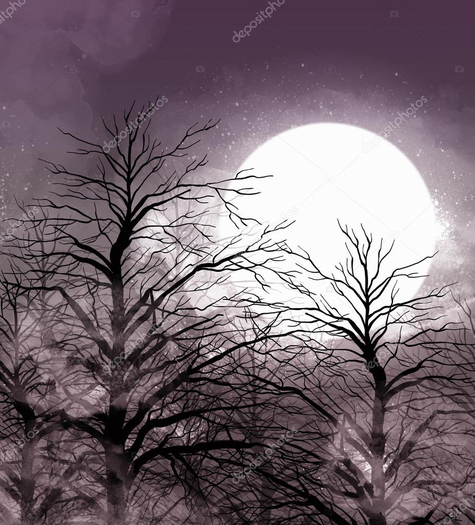 moonlight night in fairy forest