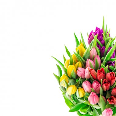 Tulip flowers. Bouquet of resh spring blooms