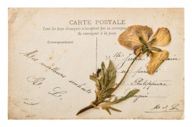 Antique french postcard with dry pansy flower. handwritten vintage mail. nostalgic sentimental background stock vector