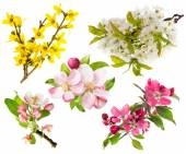 Photo Different blossoming tree  branches