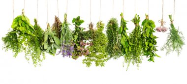 Kitchen herbs hanging isolated on white background. Food ingredients stock vector