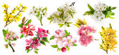 Photo Blossoms of apple tree, cherry twig, pear, forsythia. Set of spr