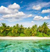 Sand beach with palm trees and cloudy blue sky. Tropical island