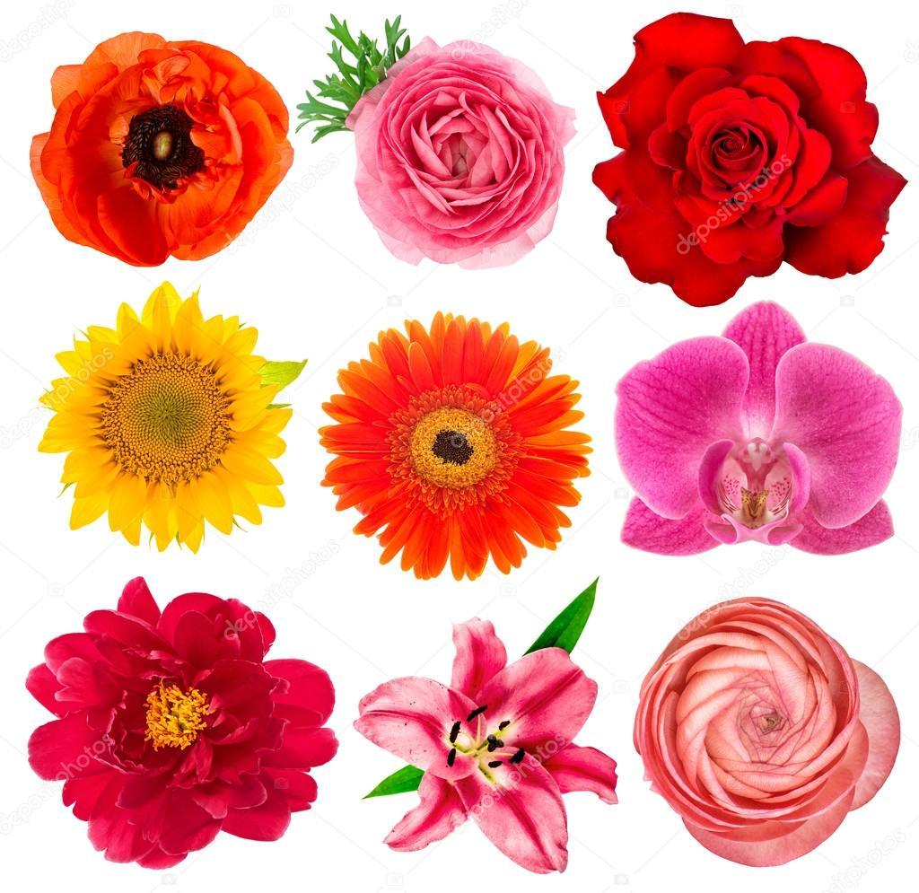 Single flower heads. Lily, orchid, ranunculus, sunflower, gerber