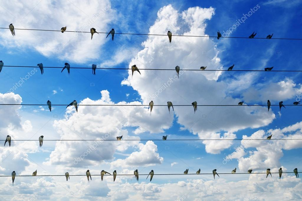flock of swallows on blue sky background