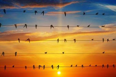 birds on a background of sunrise