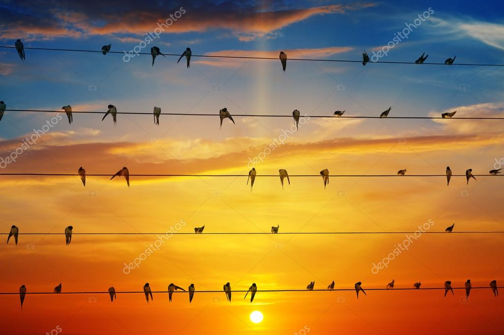 birds on a background of sunrise