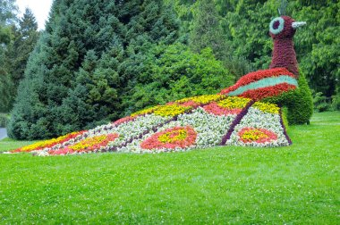 flower bed in the form of figures peacock