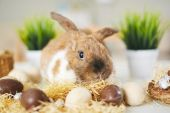 Photo Easter rabbit and eggs