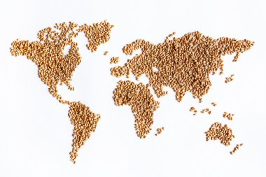 world map of wheat