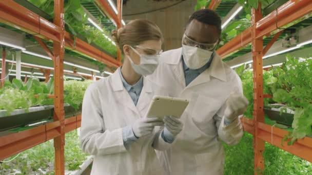 Lassú mozgás közepes lövés a különböző fiatal pár botanikusok laboratóriumi köpenyben vizsgálja növekedését palánták, nő gazdaság digitális tabletta jegyzeteléshez