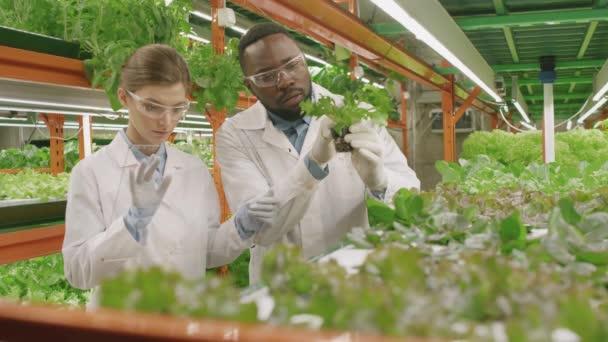 Zöld ökológiai növényeket vizsgáló, vertikális mezőgazdasági palántákon tudományos kutatást végző, többnemzetiségű botanikusok lassú mozgású közegképe