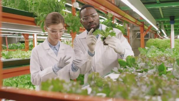 Lassú mozgású közepes felvétel többnemzetiségű fiatal botanikusokról, akik tudományos kutatásokat végeznek a zöld organikus növényeket vizsgáló, függőleges mezőgazdasági palántákon, négyzet alakú üvegdarabot tartó nőkön.
