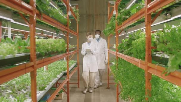 Lassan mozgó teljes felvétel a különböző fiatal pár botanikusok laboratóriumi köpenyben séta nagy kortárs függőleges gazdaság vizsgálata növekedését palánták és megvitatása a kutatás