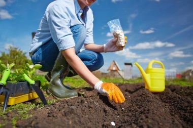 Plantingfarmer sowing seed in garden