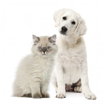 Cat and dog sitting isolated on white