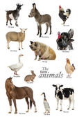 Educational poster with farm animal in English