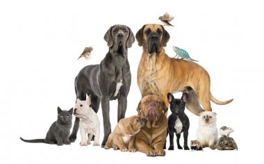 Group of pets - Dog, cat, bird, reptile, rabbit, isolated on whi