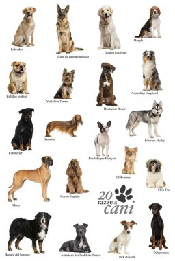 Dog breeds poster in Italian