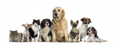 Group of Dogs and a cat