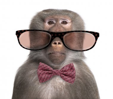 Baboon wearing glasses and a bow tie  in front of a white backgr