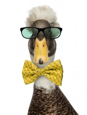 Close-up of a Male Crested Ducks wearing glasses and a bow tie i