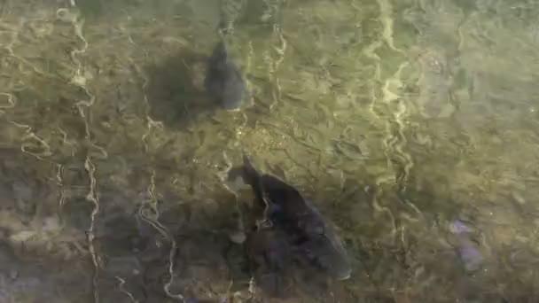 Ryby v jezírku