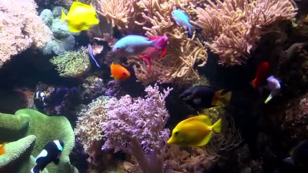 The  fishes in an Aquarium