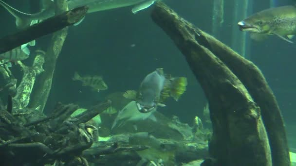 Fisches v akváriu