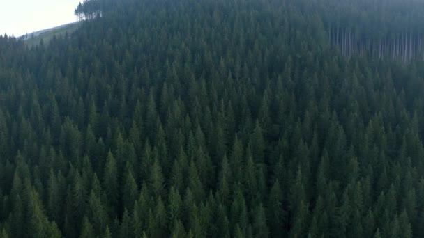 Evergreen les Ukrajinských Karpat, pohled shora, bezpilotní let nad lesy Karpat.