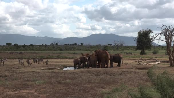 Africa. Kenya. Elephant Family in Green Meadow of African Savannah. Animals in Conservation Area of National Park.