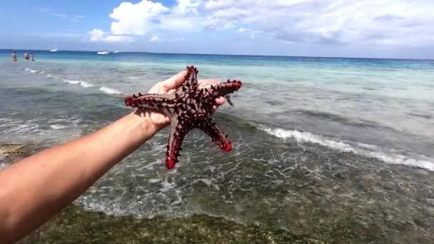 Zanzibar. Barevná hvězdice, Oreaster reticulatus, se pomalu plazí po mělkém písečném mořském dně Indického oceánu.