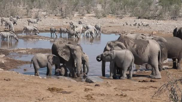 Wildtiere. Tiere. Elefantenherde trinkt Wasser aus einem Teich im Etosha-Nationalpark, Namibia.