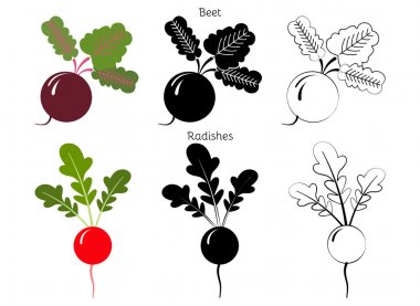 Vector set radishes and beets