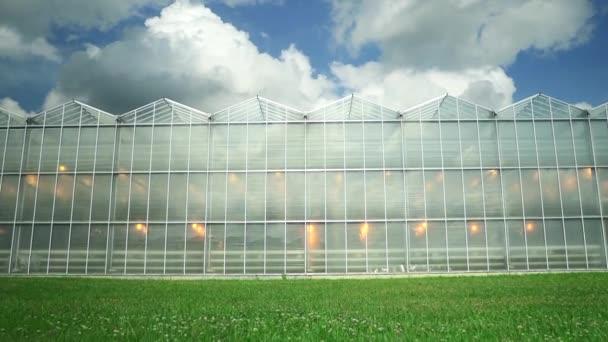 Greenhouse green agricultural hydroponic building under blue sky on summer day spbd