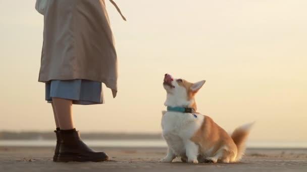 Žena a roztomilý mazlíček mají čas spolu na mořské pláži během západu slunce venku spbi.