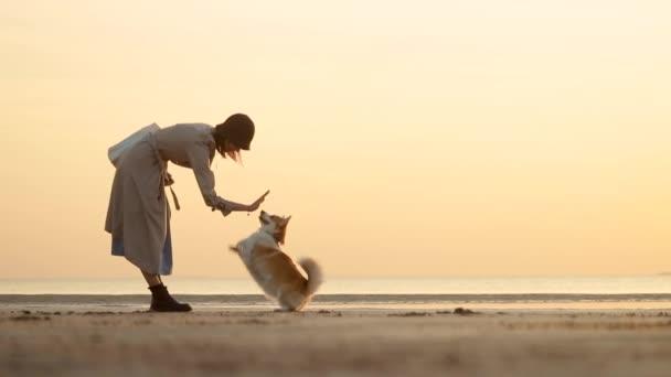 Frau und Haustier haben Zeit zusammen am Strand während des Abendsonnenuntergangs im Herbst draußen spbi.