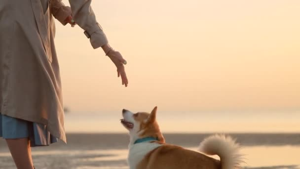 Hundetraining am Strand Spbi. Haustier auf Pfote aufstehen, um die Hand der Besitzerin zu berühren. Bewegungskonzept