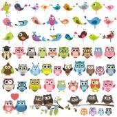 sada kreslený pestrobarevných ptáků a SOV
