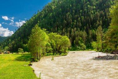 Altai Mountain River
