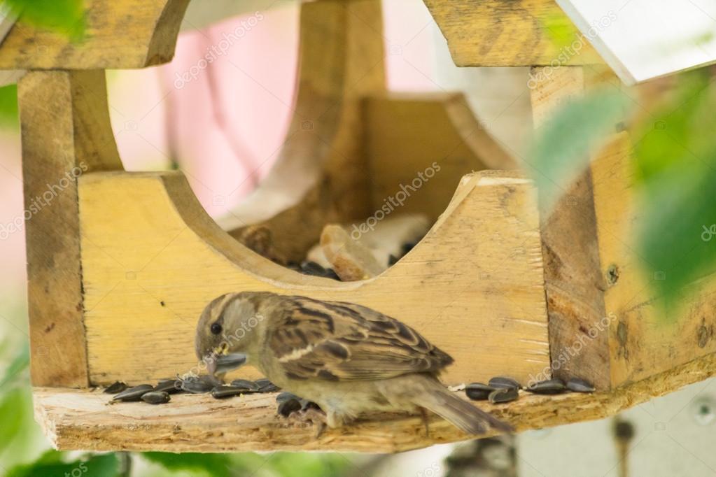Sparrows arrived